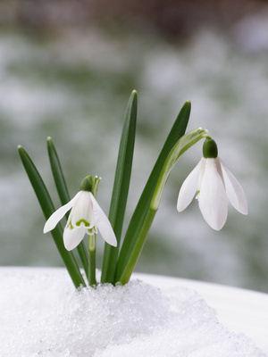 Des fleurs d ext rieur m me en hiver for Plantes exterieur hiver