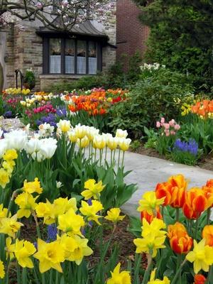 r ussir un jardin de tulipes. Black Bedroom Furniture Sets. Home Design Ideas