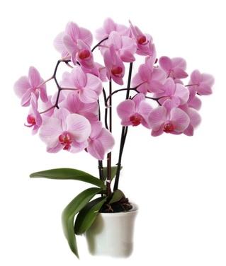 LA RENCONTRE dans Divers orchidee